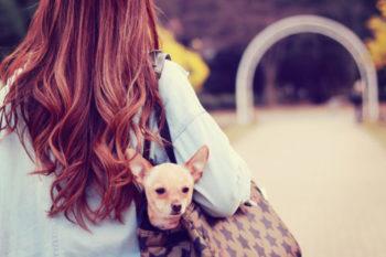 今日から犬系女子に!共通の特徴や恋愛傾向と、好相性の相手16選♡