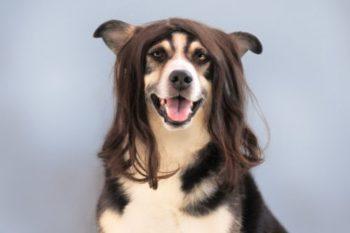 犬系男子の特徴や恋愛傾向と、相性がいい女性のタイプ14選♡
