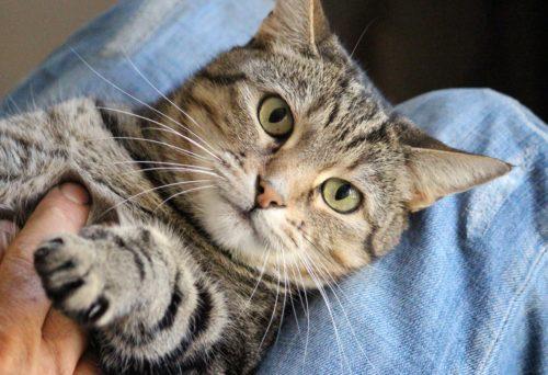 猫好き男子の性格や特徴と、芸能人や落とす方法、おすすめのプレゼント24選♡