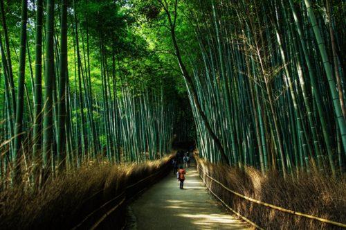 嵐山デート