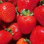 苺大福専門店「苺庵」は、秋葉原で一年中いちご大福が楽しめちゃう♡